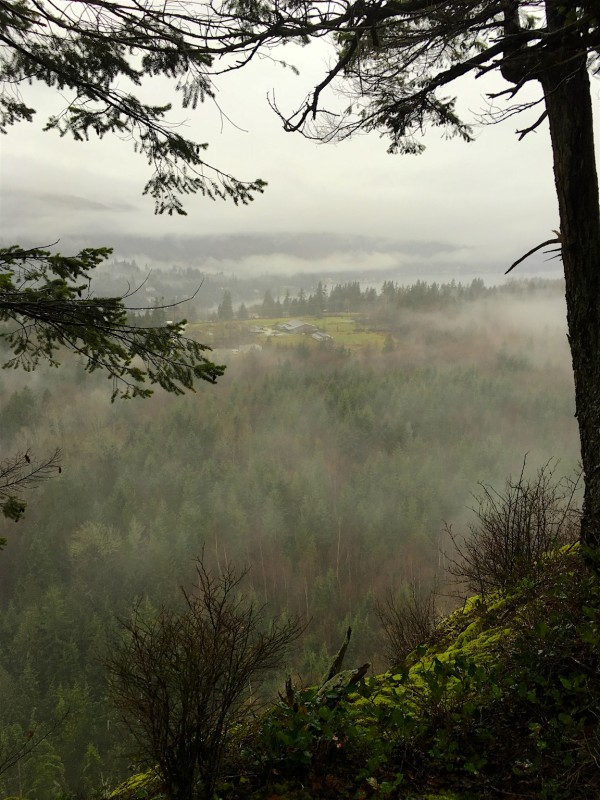 One morning it was rainy and foggy on our daily hike to the Big Lake overlook. What a beautiful, moody scene.